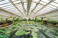 Лилии и пруд воды в парнике Виктории сада Мюнхена ботанического Стоковое Изображение RF
