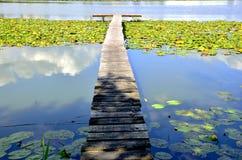 Лилии озера, набережной и воды Стоковая Фотография