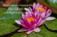 Лилии сада с вдохновляющей цитатой Стоковое фото RF