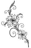 Лилии, цветки Стоковое Изображение