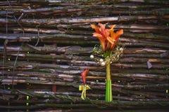 Лилии Calla около деревянной загородки Стоковые Фото