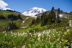 Лилия лавины и Mt более ненастные Стоковые Изображения RF