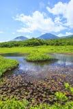 Лилия воды болота Стоковые Изображения RF