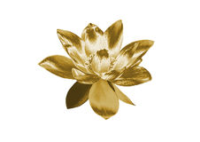 Лилия золота иллюстрация штока