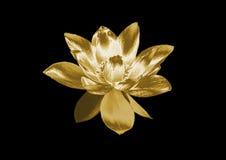 Лилия золота иллюстрация вектора