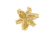 Лилия золота Стоковые Фото