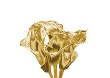 Лилия золота Стоковое Изображение