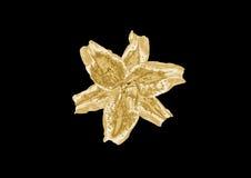 Лилия золота Стоковое фото RF