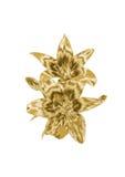 Лилия золота Стоковое Изображение RF