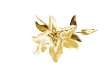 Лилия золота Стоковое Фото