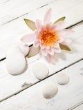 Лилия и камешки воды