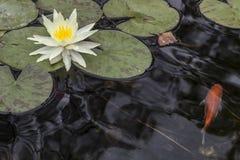 Лилия и рыбы Стоковое Изображение