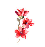 Лилия красного цвета цветет акварель иллюстрация штока
