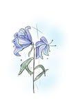 Лилия цветка Стоковые Фотографии RF