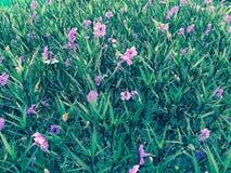 Лиловый цветок стоковое фото