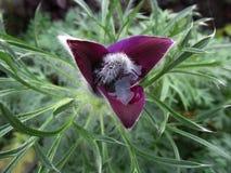 Лиловый цветок Стоковые Изображения RF