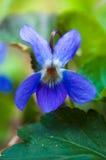 Лиловый цветок Стоковое фото RF