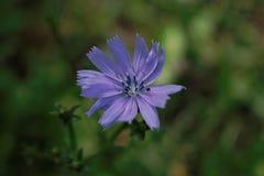 Лиловый цветок Стоковые Фотографии RF