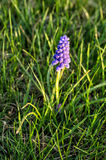Лиловый цветок 2 Стоковое Изображение