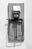 Ловушка мыши с кнопкой Стоковые Фотографии RF