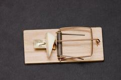 ловушка мыши Стоковые Изображения RF