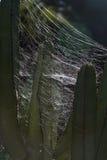 Ловушка паука Стоковая Фотография RF