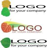 логосы листьев осины Стоковое Изображение RF