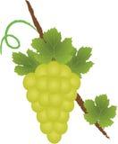 логос виноградины Стоковая Фотография