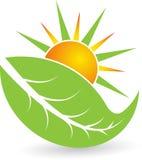 Логос листьев лета Стоковое Изображение