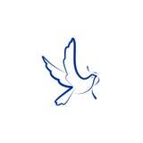 Логотип вектора птицы голубя Стоковая Фотография RF