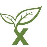 Логотип инициала x вектора зеленый Стоковые Фото