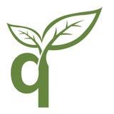 Логотип инициала q вектора зеленый Стоковая Фотография RF