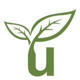 Логотип инициала u вектора зеленый Стоковые Фото