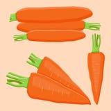 Логотип иллюстрации для желтых морковей иллюстрация вектора