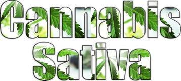 Логотип конопли Sativa высококачественный стоковая фотография rf