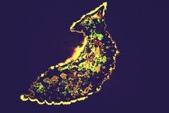 Логотип рыб Стоковые Изображения