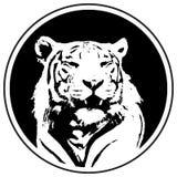 Логотип тигра Эмблема символа команды Голова вектора дикой кошки в круге Стоковые Фото