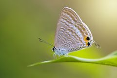 Лодкамиамфибии, животное, animales, животные, animalwildlife, бабочка, dumpy, насекомое, сторона, лягушка, зеленый цвет, макрос,  Стоковая Фотография