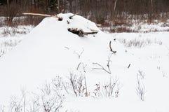 Ложа бобра в снежке Стоковые Изображения RF