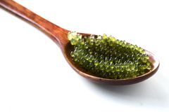 Ложка виноградин моря или зеленой морской водоросли lentillifera Caulerpa икры изолированных на белой предпосылке Взгляд сверху стоковое изображение rf