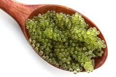 Ложка виноградин моря или зеленой морской водоросли lentillifera Caulerpa икры изолированных на белой предпосылке Взгляд сверху стоковая фотография rf