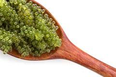 Ложка виноградин моря или зеленой морской водоросли lentillifera Caulerpa икры изолированных на белой предпосылке Взгляд сверху стоковые фотографии rf