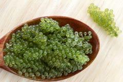 Ложка виноградин моря или зеленой морской водоросли lentillifera Caulerpa икры изолированных на белой предпосылке Взгляд сверху стоковые фото