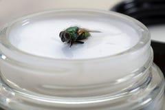 Ложка дегтя в бочке меда 2 Стоковое Фото