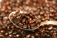 ложка кофе фасолей Стоковое Изображение