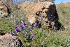 Ложная пурпурная охраняемая природная территория Оклахома гор wichita Thistle стоковое фото rf