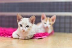 Ложь котов на ковре Стоковое Изображение