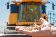 Ложь колоска пшеницы на мужской ладони Стоковое фото RF