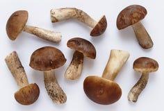 Ложь лекцинума подосиновика грибов на белой предпосылке Макрос взгляд сверху стоковая фотография rf