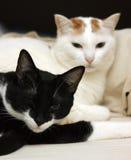 ложь 2 котов кровати Стоковое Изображение RF